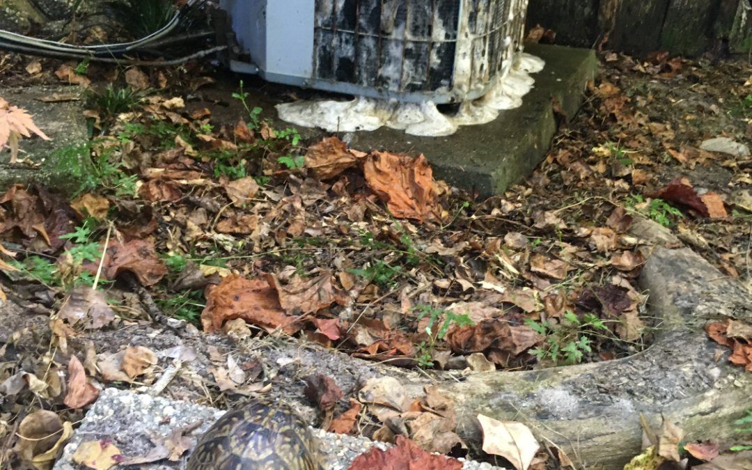 Why is a clean AC coil so important